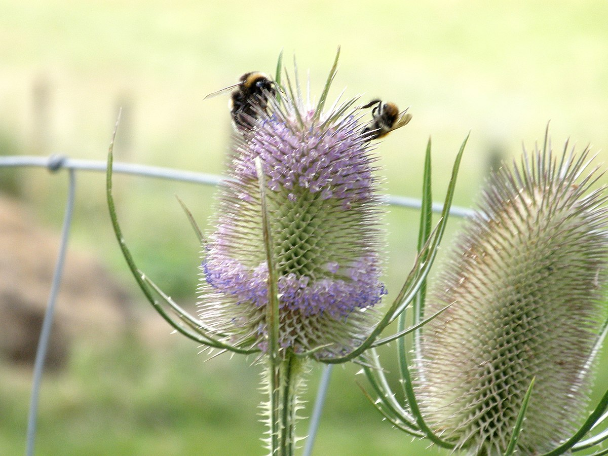 Bees Sting
