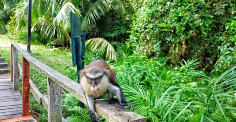 The Lekki Conservation Centre (LCC), Lagos - 5 Tourist Attractions In Nigeria You Must Visit